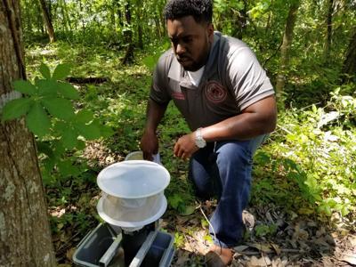 Michael Joseph Mosquito Trap