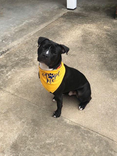 Casper the friendly pup