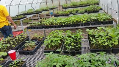 Vegetable Plants.jpeg