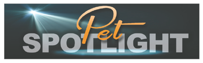 Pet spotlight header