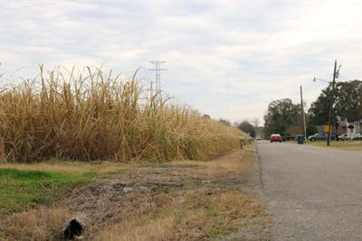 Red Hat Road sugarcane field