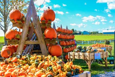 Fall Market Festival
