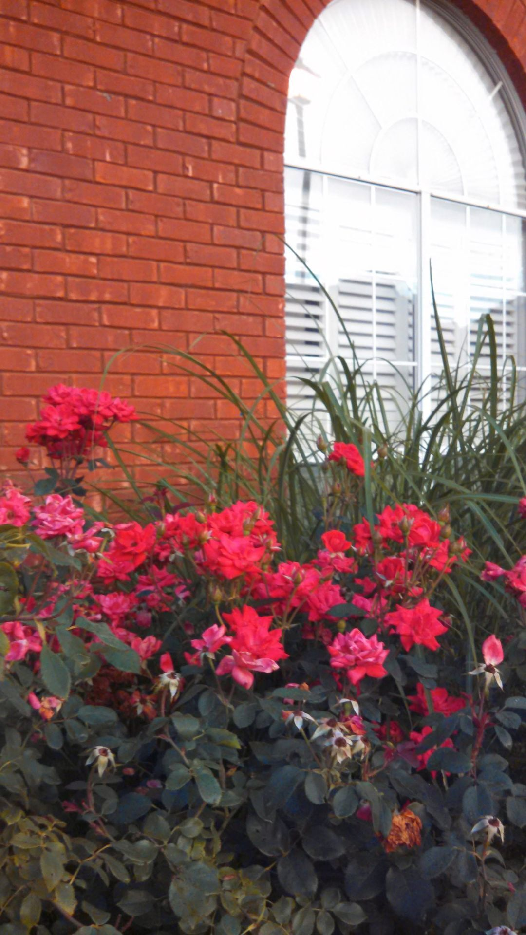 Think before you prune shrubs and ornamentals during the fall