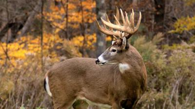 Game and Fish Announces Concurrent Season Deer Licenses ...