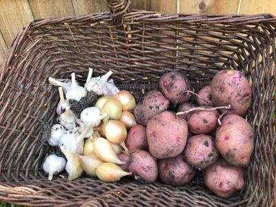 Dakota Gardener Storing Produce