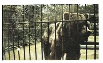 City Park Zoo - Pete the Bear