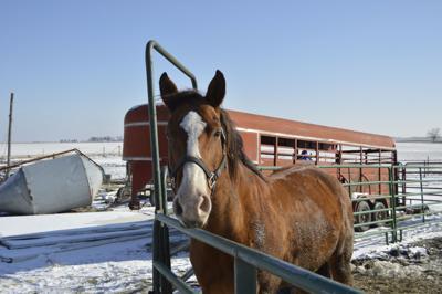 Lucky Star Rescue Horse
