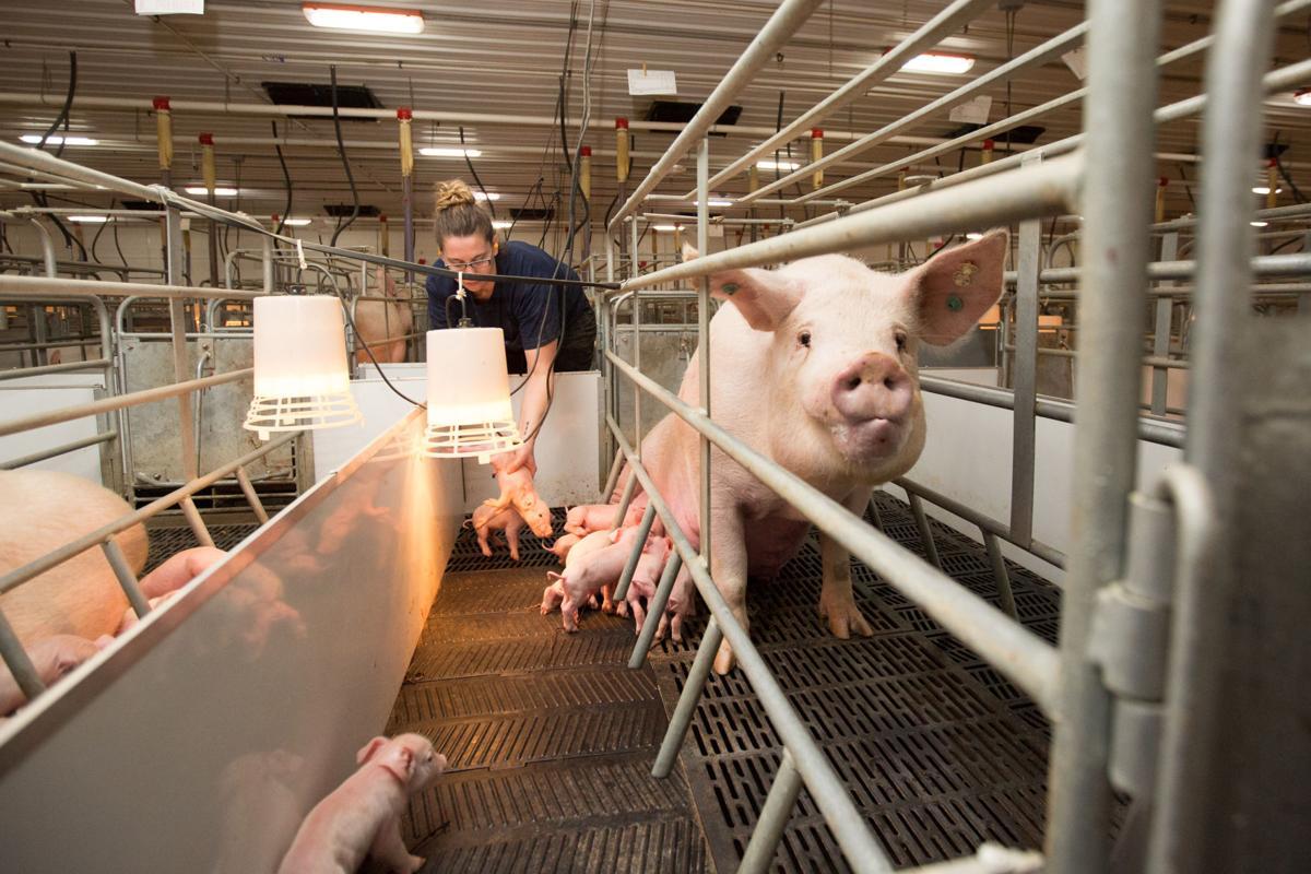Iowa Select Farms