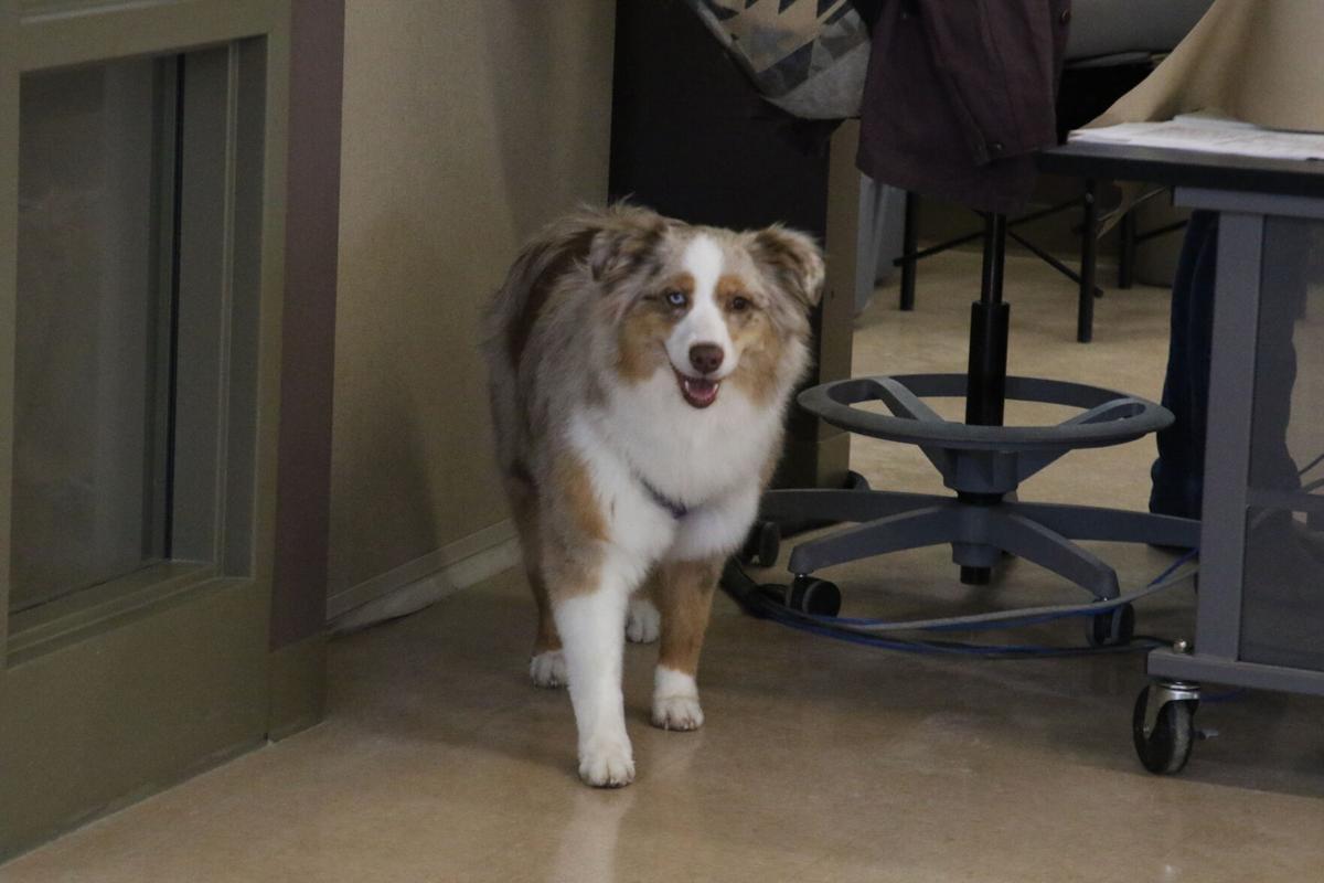 Pre-veterinary medicine program