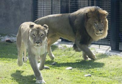 UNA ghost tour benefits lion mascots