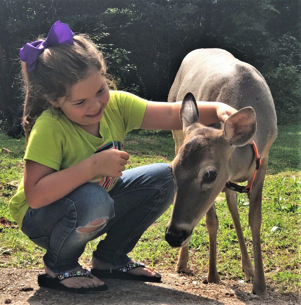 Dixie deer 01.jpg