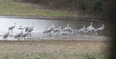 D190113 Cranes