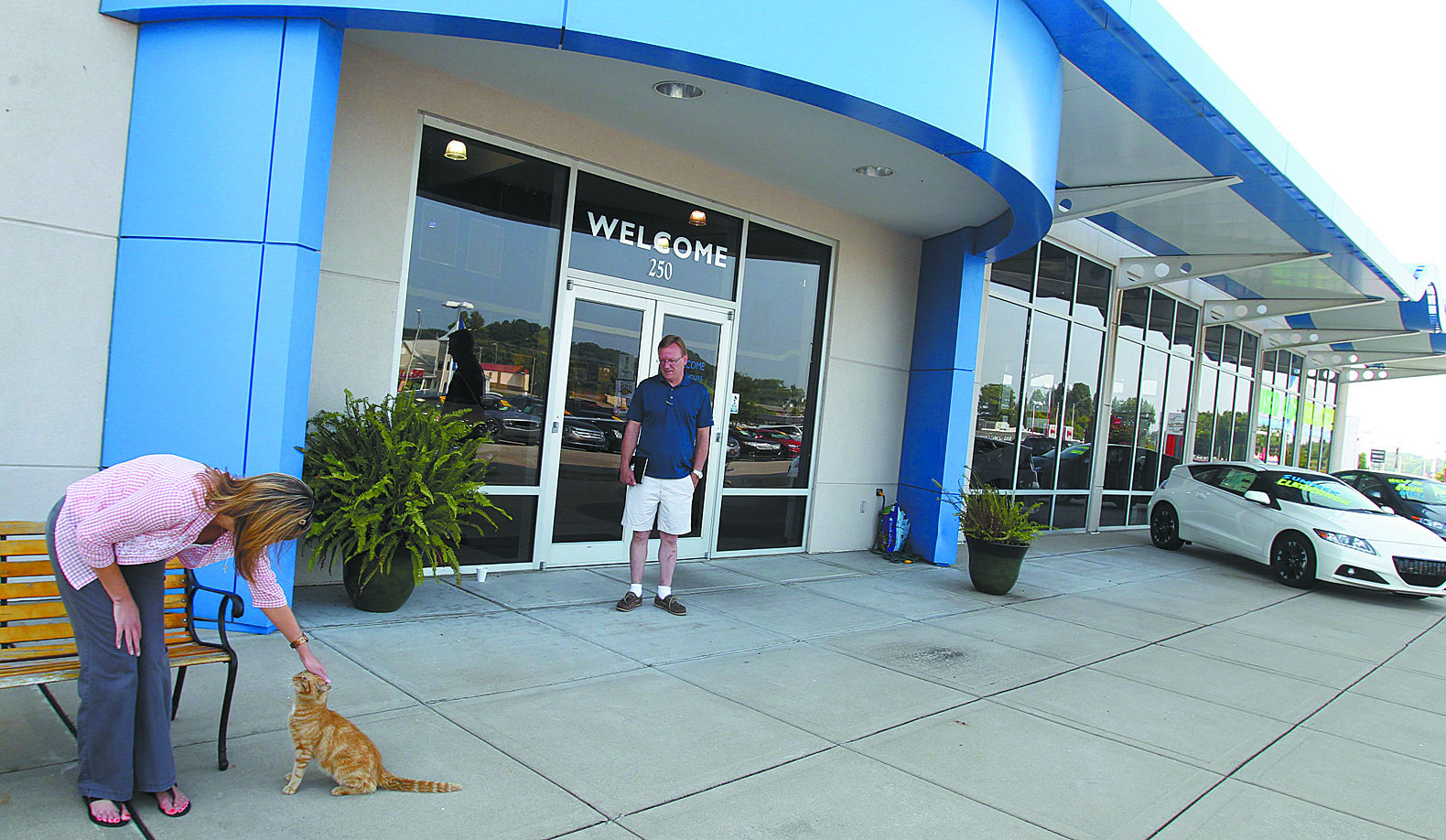 Cat Part Of The Family At Damson Dealership