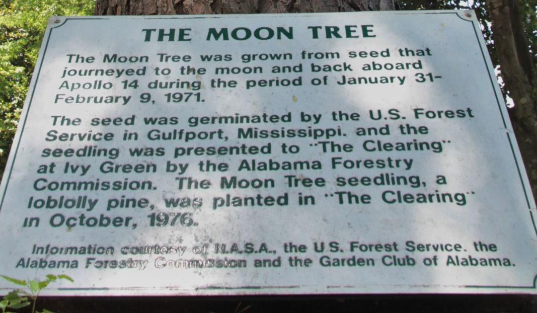 moon tree 03.jpg
