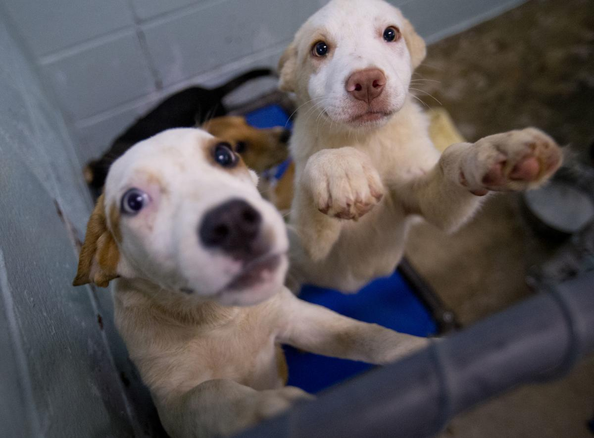 180523 Animal Shelter 2