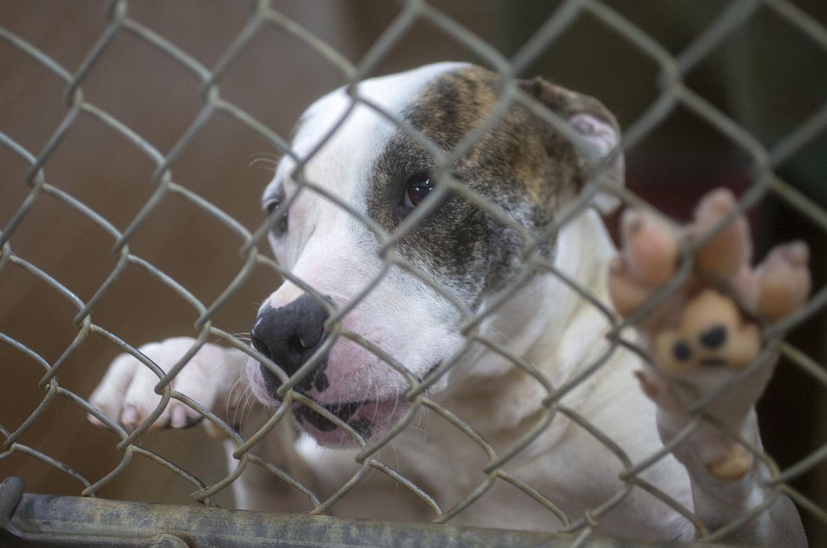 200320 Colbert County Animal Shelter 1