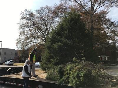 Florence tree.jpg