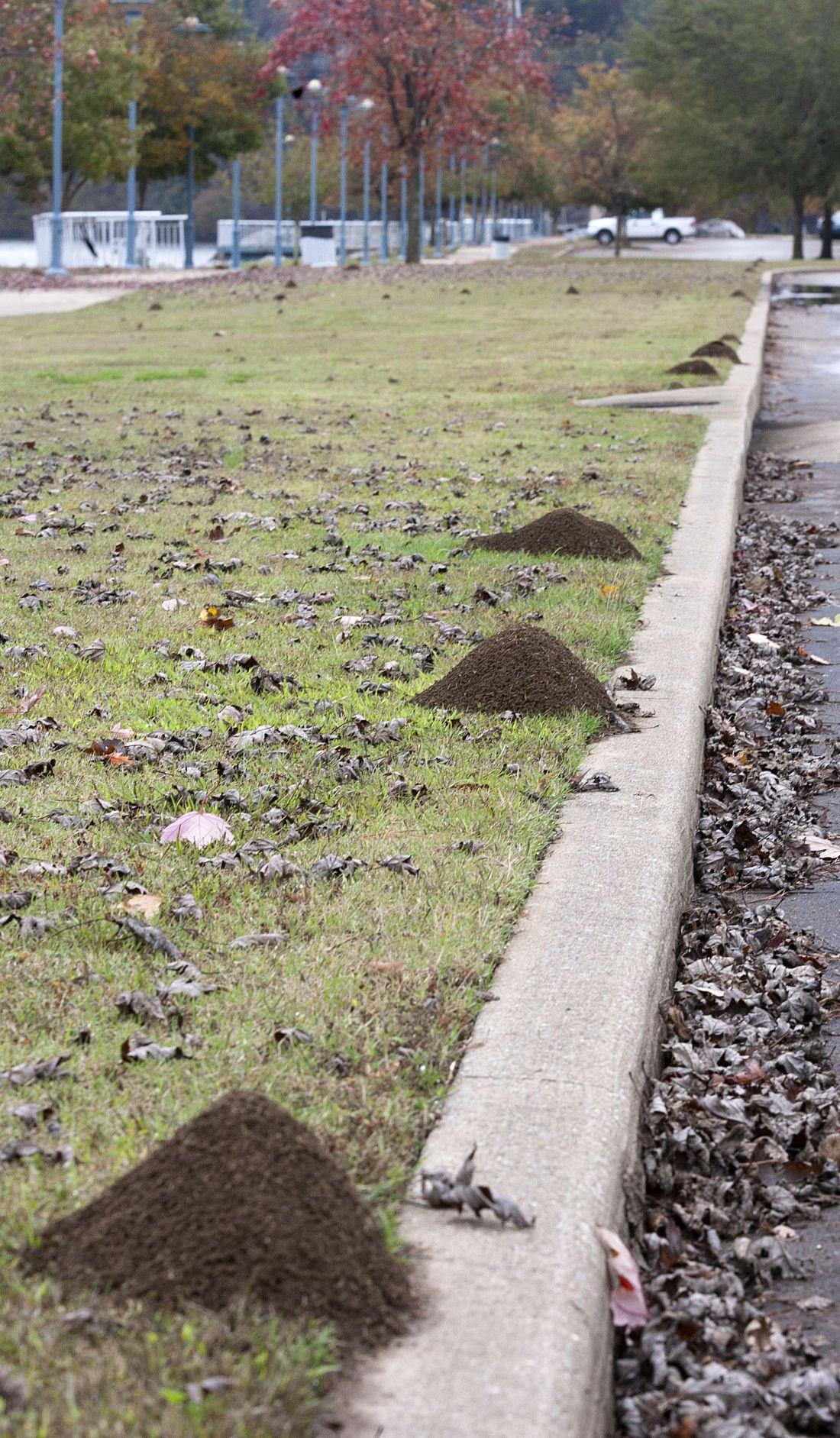 McFarland Park Ants 2