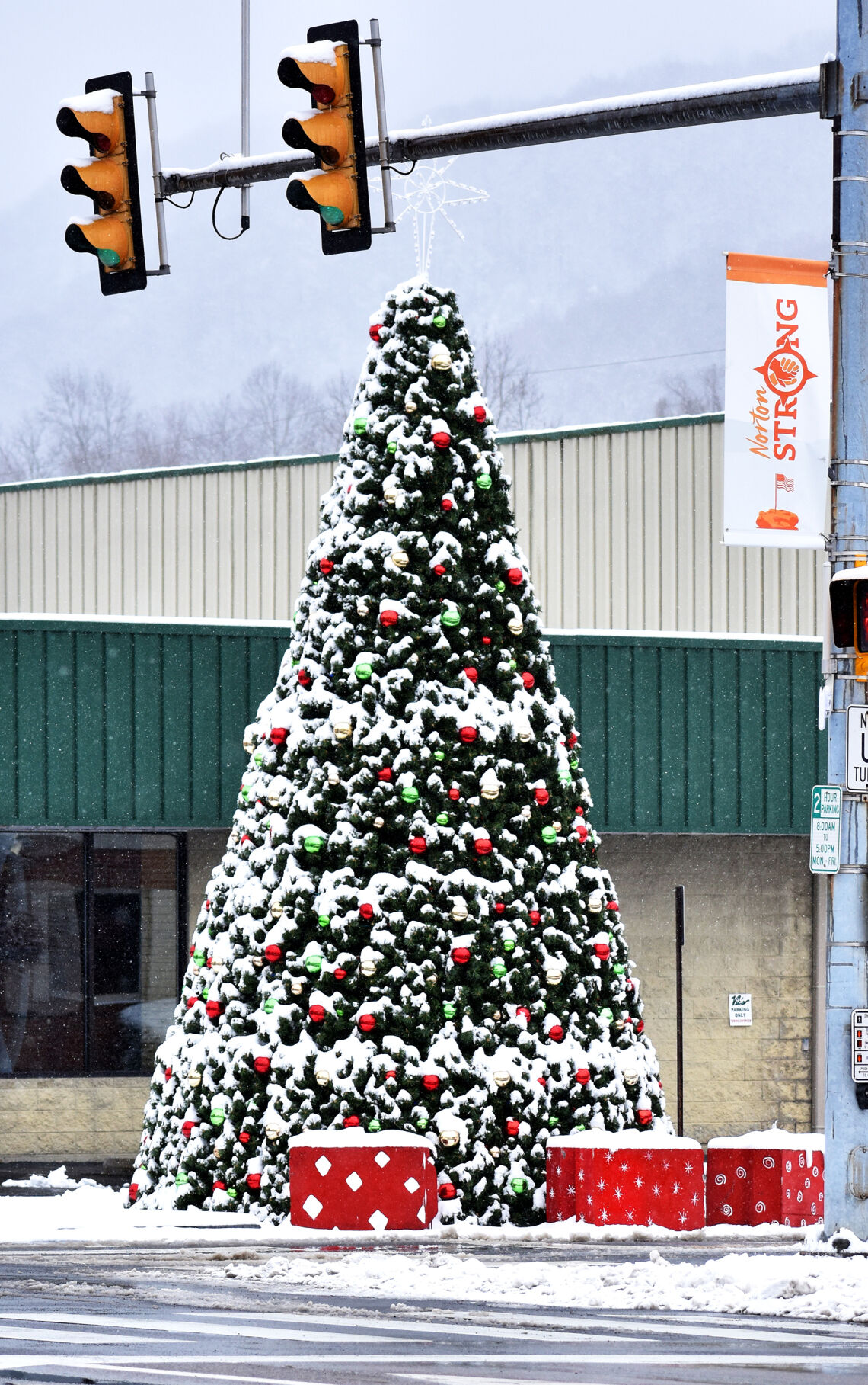 Snow day, Jan. 8, 2021 - Oh Christmas tree ...