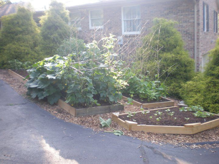 Vegetable Gardening May Blossom Because