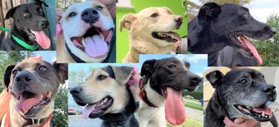 Dog Collage 5-10-21