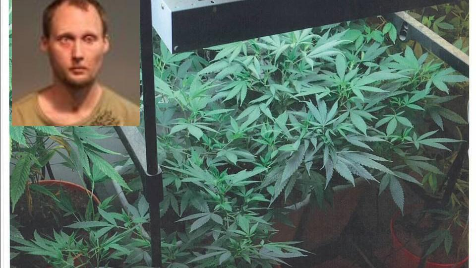 Tip Leads To 122 Pot Plants In Lee County Crime Timesnews Net