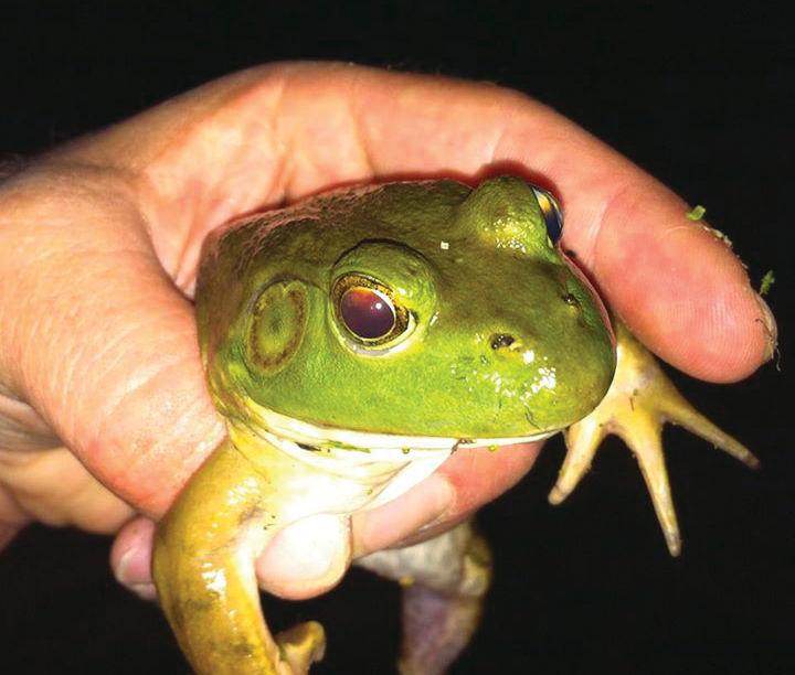 frogs1.jpg