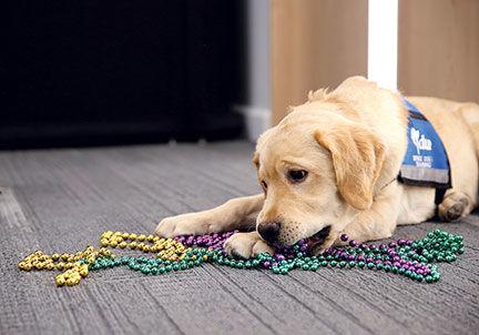 Blues-Puppy-#2.jpg