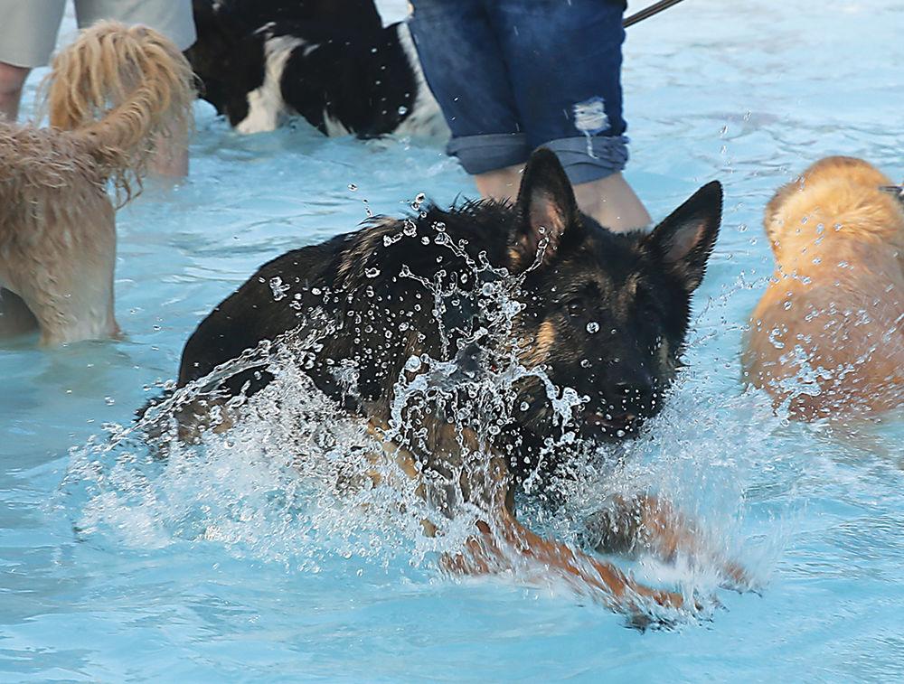 dogsS2.jpg