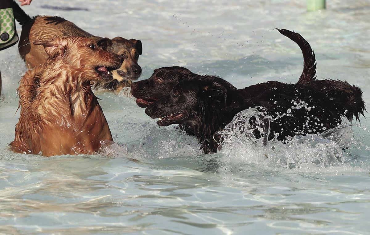 Dog Swim #1.tif