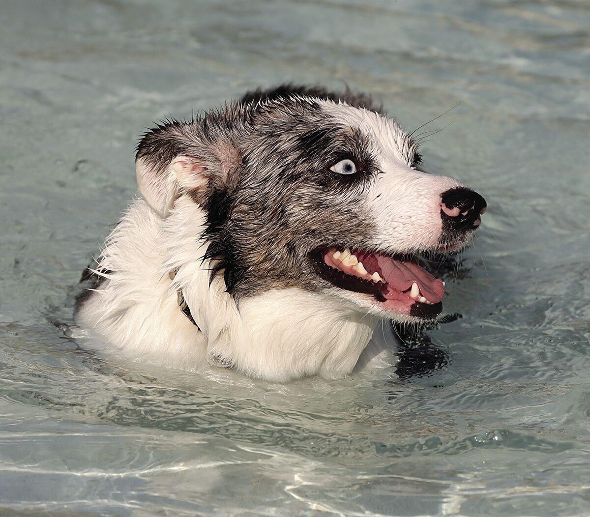 Dog Swim #2.tif