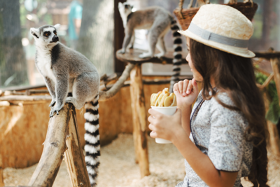 Toronto And GTA Zoos And Animal Attractions You Can Now Visit