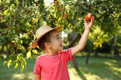 Apple Picking in the GTA with Kids