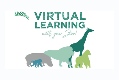 Live Virtual Learning With The Toronto Zoo