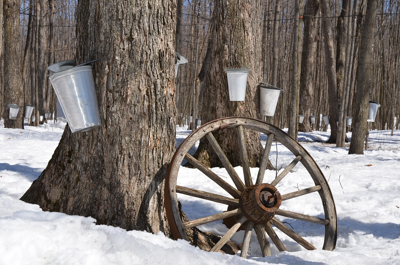 What's Happening With Maple Syrup Festivals In 2021