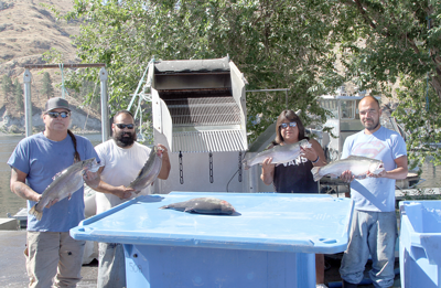 Pacific Aquaculture's harvest crew, from left to right, Terry Gallagher, Tony Chapa, Tony Wilson and Virgil Elwell.