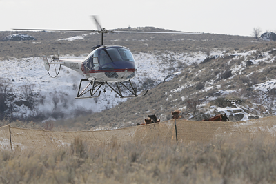 A helicopter herds a group of feral horses into corrals near Nespelem's Buffalo Lake, Thursday, as part of a contract to remove between 1,000 and 1,5000 feral horses from reservation range lands.