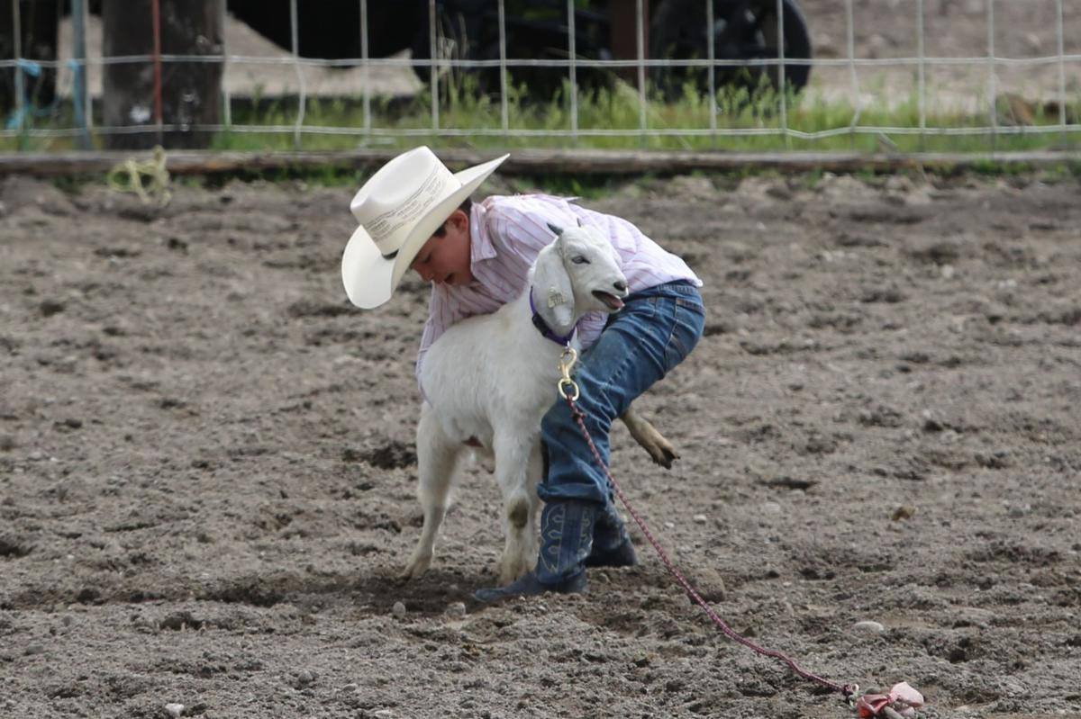 Colville tribal member Camiuse Pakootas looks to flip his goat in the peewee goat competition, Sunday at the Nespelem Junior Rodeo.