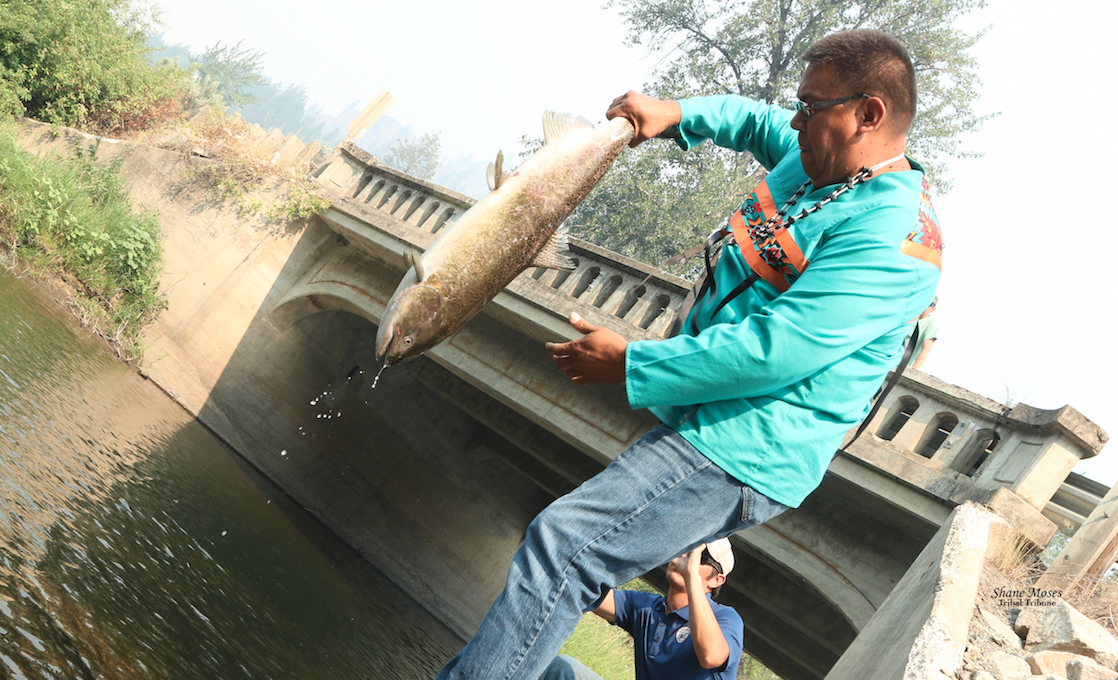 Colville Tribal member Darnell Sam holds a chinook salmon up as he gets ready to release it into the Sanpoil River on Thursday (Aug. 12) morning about 20 miles north of Keller. Before releasing, Sam said a prayer for the Salmon.