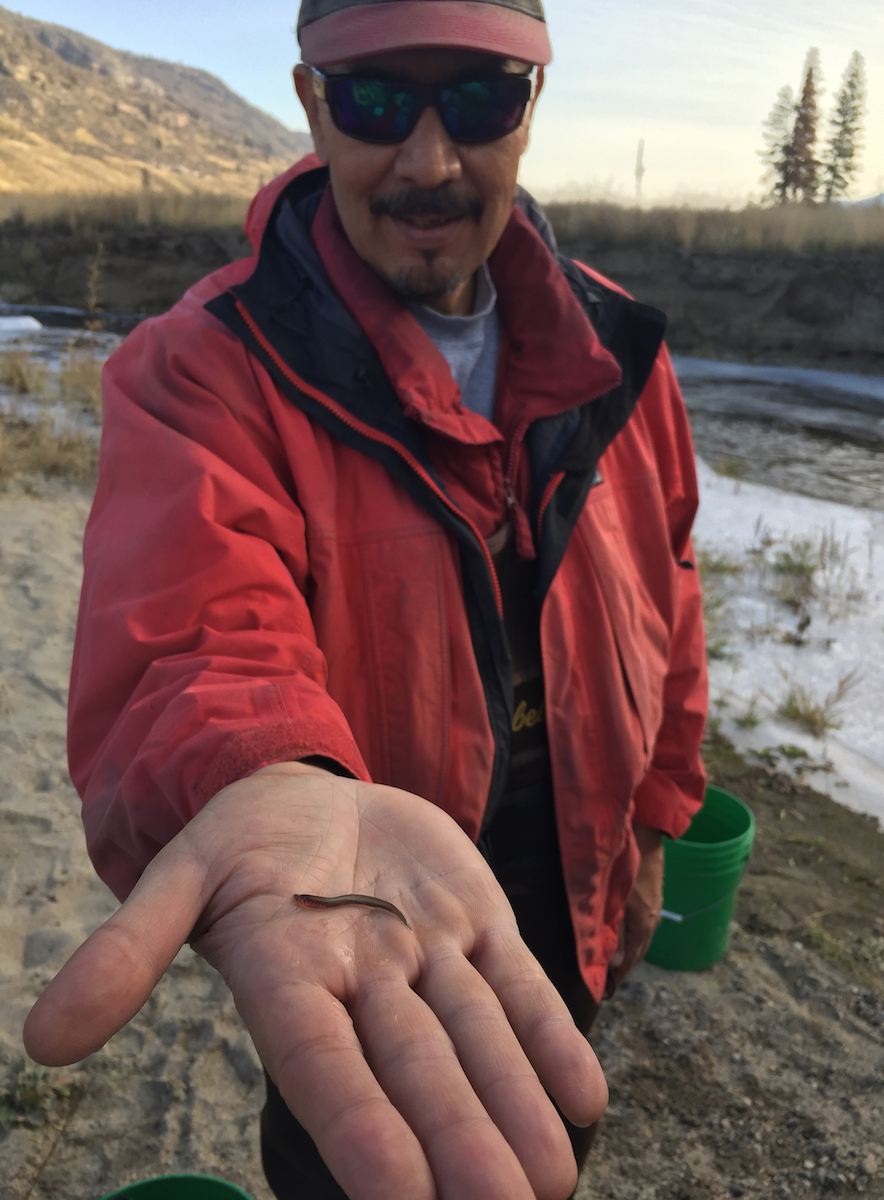 Mike Miller, tribal fisheries' Senior Fisheries Technician, holds a larval lamprey.