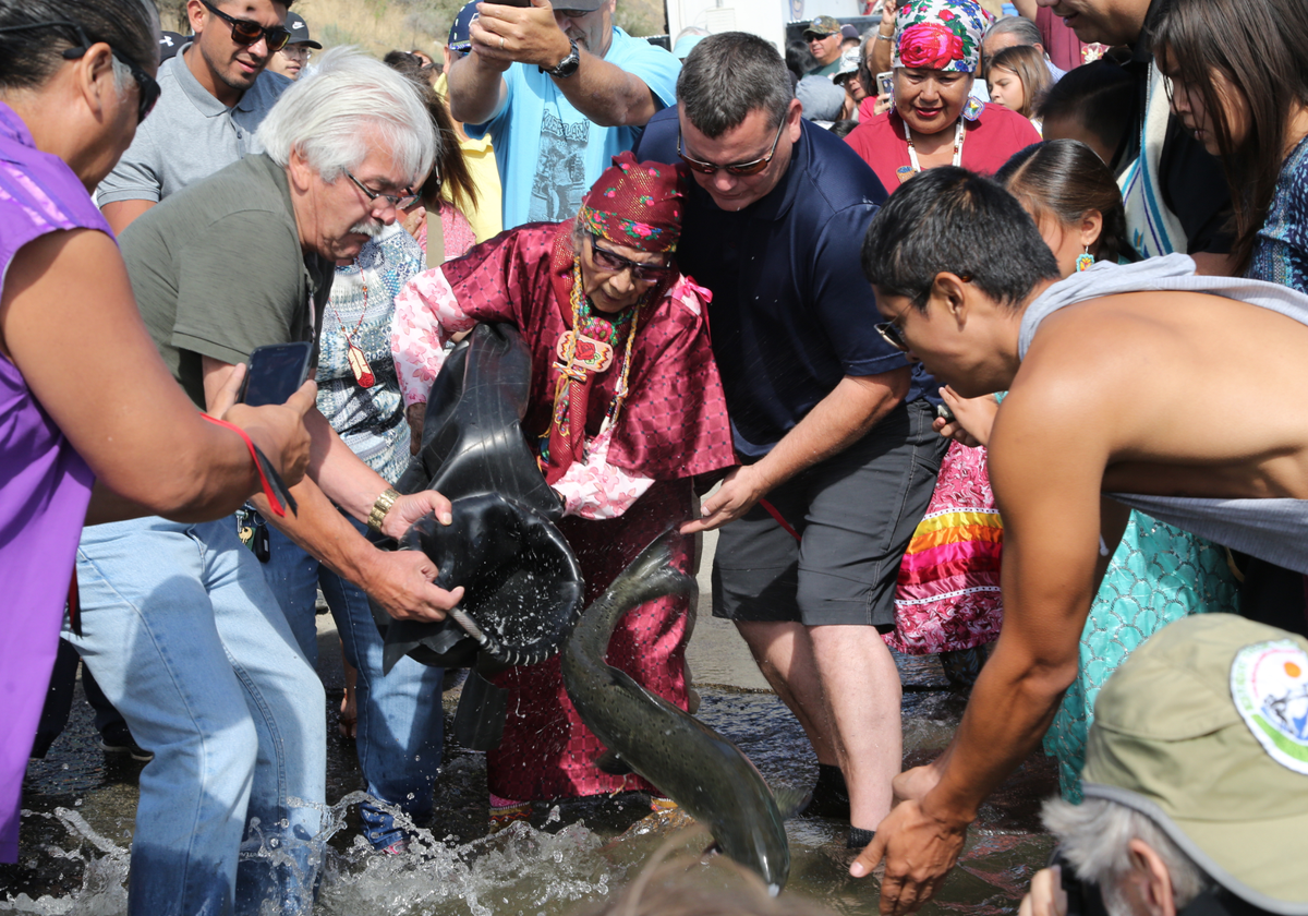 Colville elder Barb Aripa, with Colville Business Council member Joe Somday and Jack Ferguson, released the first salmon into Lake Roosevelt today.