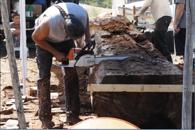 Paul Wapato saws into the cedar log, working to form the timber into a canoe at the Nespelem Community Center, July 1.