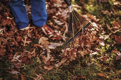 The Value Of Mulched Leaves