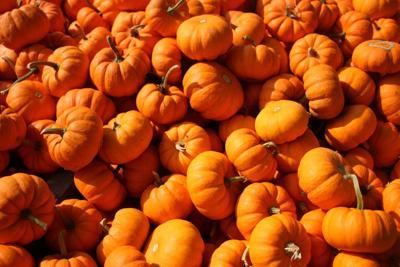 pumpkins-stock