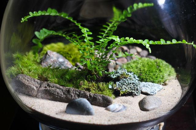 Terrariums Indoor Gardening For Beginners Cherokee Lifestyle