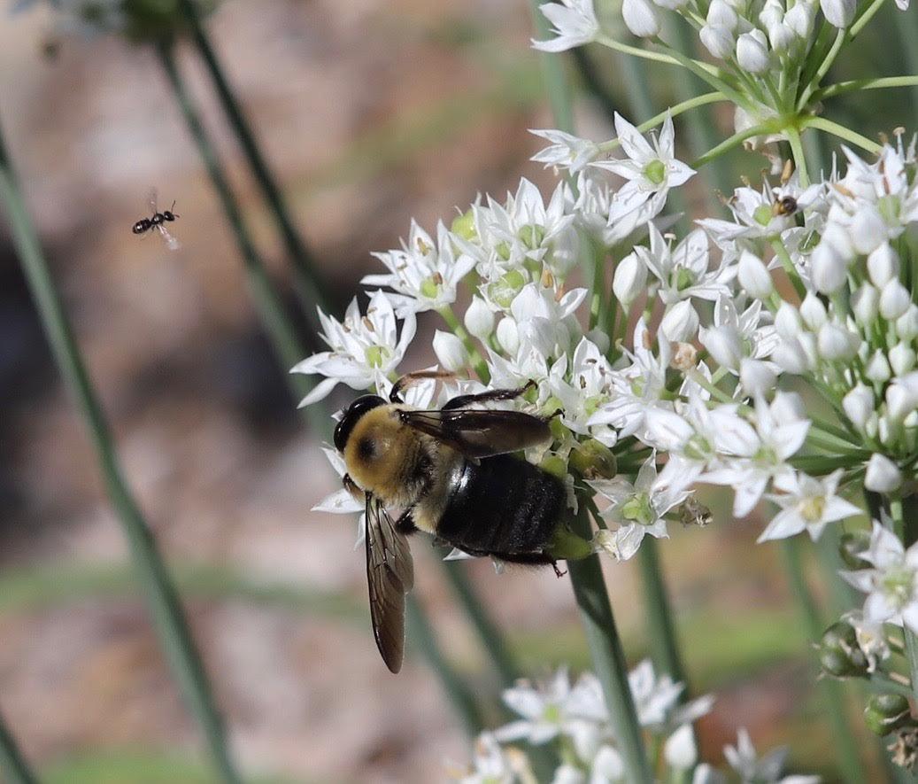 091919_CTN_Bees(JohnRuscilli)jpg.jpg