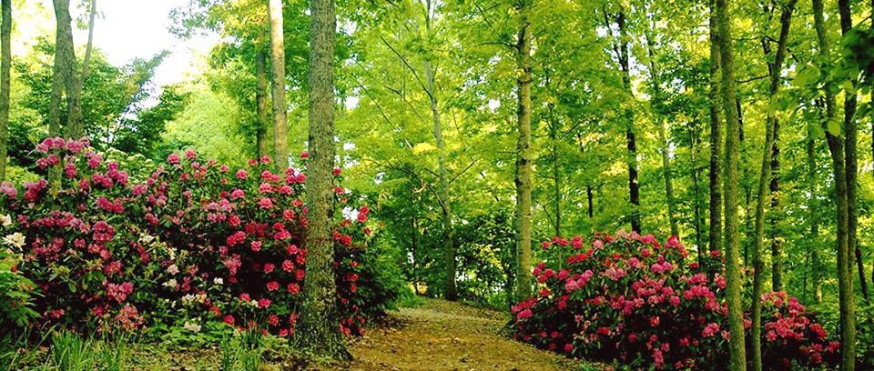 Twilight Music series returns to Gibbs Gardens   Cherokee Ledger ...