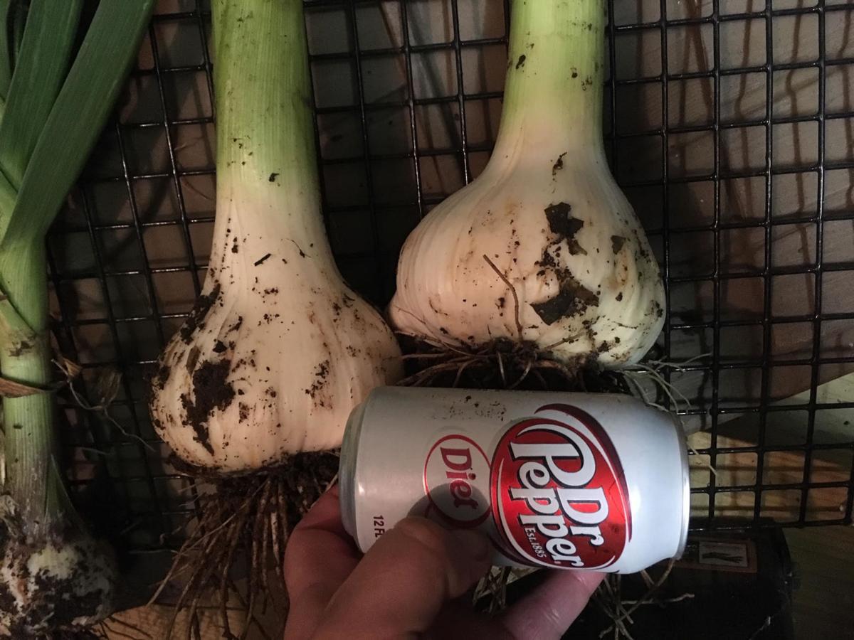 092619_CTN_Garlic(Fuder).jpg