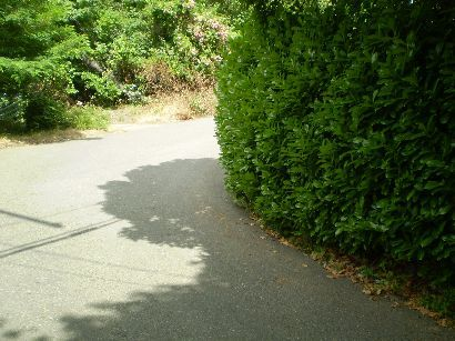 101019_CTN_ObscuredVisibility (SWTrails PDX).jpg