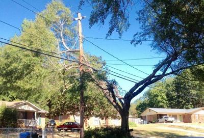 101019_CTN_Powerlines in Tree (Mike Owen, Ledger-Enquirer.com).jpeg